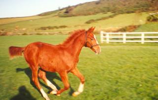 Society of Equine Behaviour Consultants Professional Training
