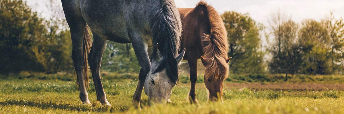 Society of Equine Behaviour Consultants - Equine Specialists